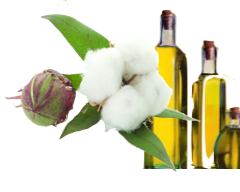 COTTON OIL